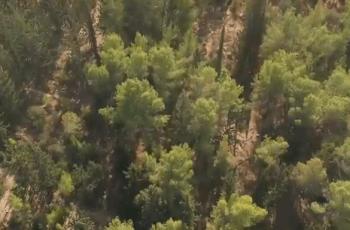 קרחת היער