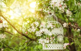 עיצוב חתונה בטבע