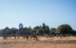 כניסת אורחים דרך השטח האפריקאי בספארי