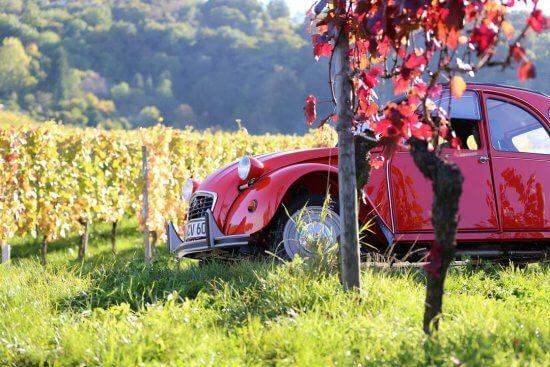 חתונה בכרם יין